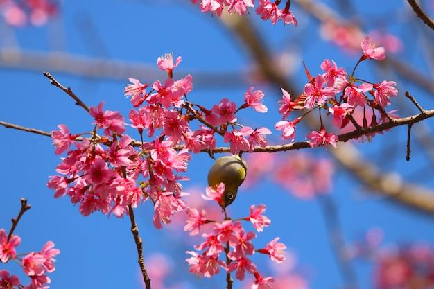 青い空を背景にヒマラヤの花のカラフルな花を持つヒヨドリかわいい鳥