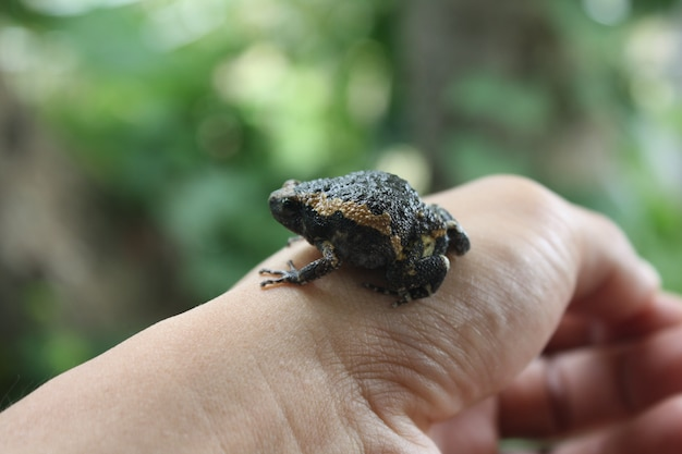Bull frog on hand nature background
