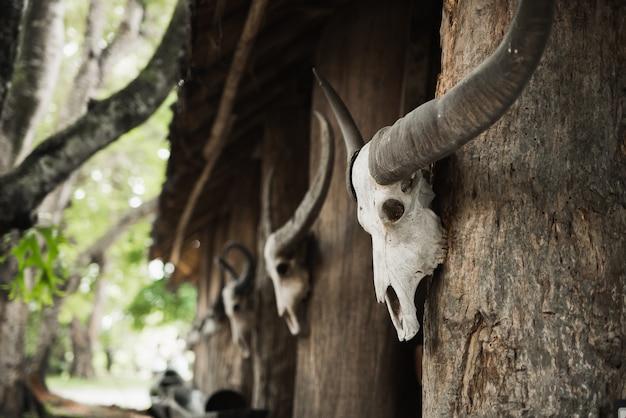 博物館での頭蓋骨