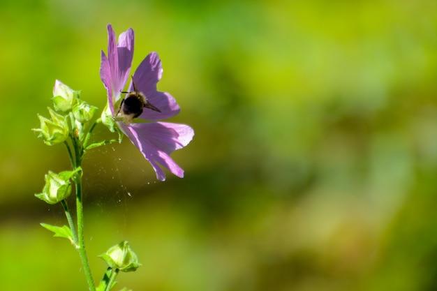 꽃과 거미줄에 꿀벌입니다. 여름.