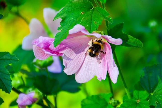 꽃에 꿀벌입니다. 여름