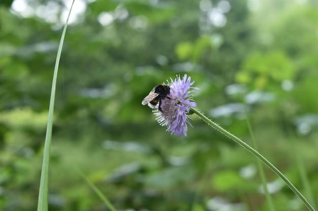땅벌은 숲 속의 꽃에 앉아 있다