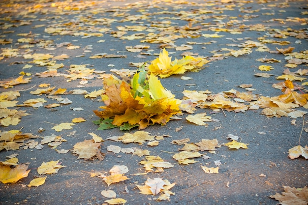 A bunch of autumn leaves on an asphalt road.