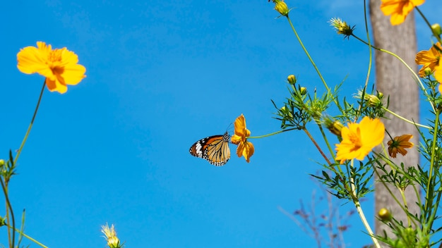 Bunch of beautiful yellow flowers with butterfly on clear blue sky background