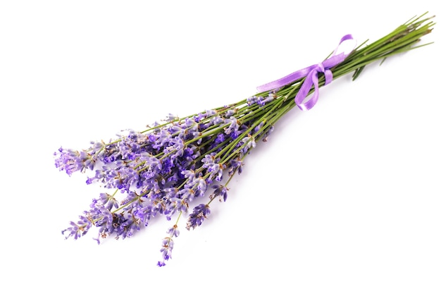 Bunch of blooming lavender on a white isolated background.