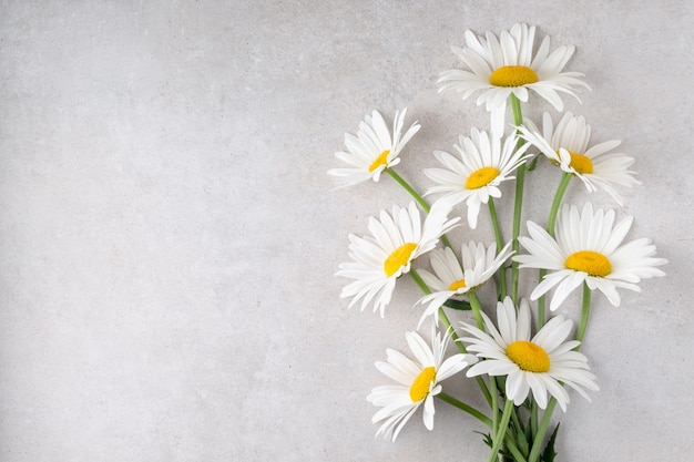 Bunch of camomile flowers on grey table flat lay daisies for holiday celebration free space