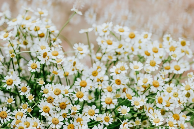 Bunch of chamomile in a flower shop