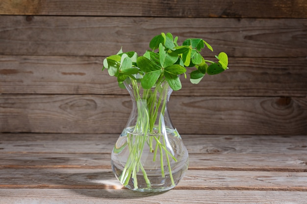 Bunch of clover leaves in transparent glass vase