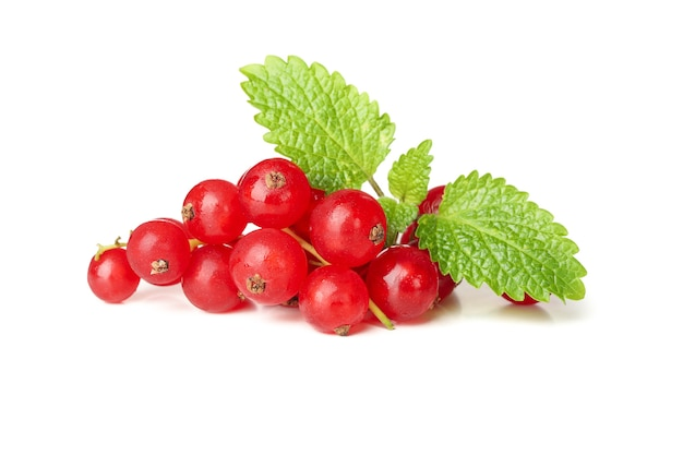 Bunch of cranberry isolated on white