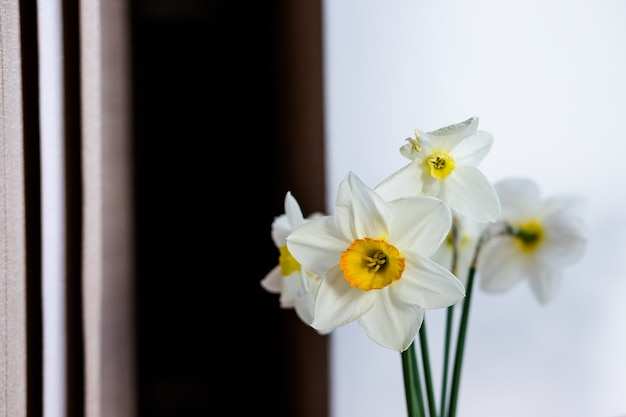Bunch of daffodils in vase isolated on white background.home interior with easter decor.bouquet of fresh spring flowers. white daffodil narcissus in glss vase . copy space