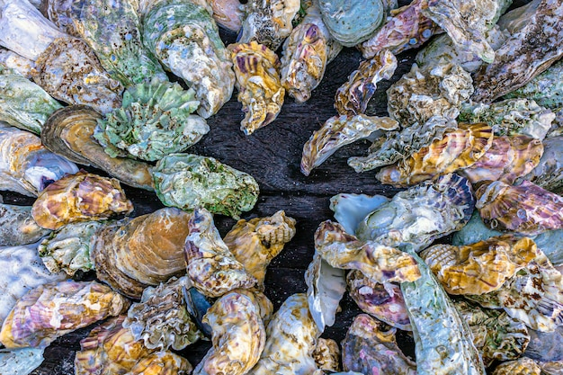 Bunch of empty  marine oyster shells on a barrel for decoration. textural background with marine life, copy space for text.