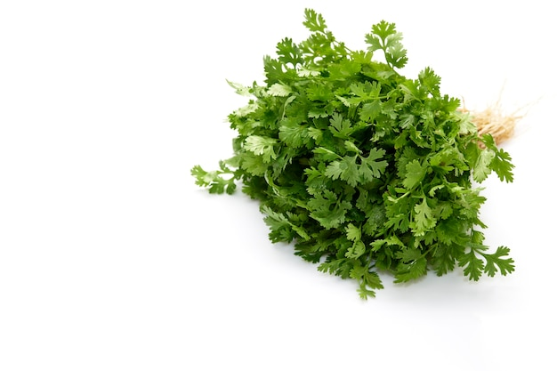Bunch of fresh coriander leaves on white background