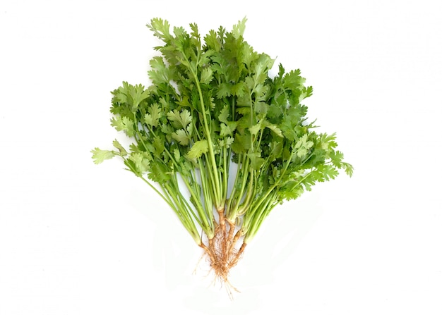 Bunch of fresh coriander leaves on white background.