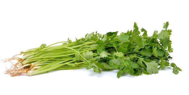 Bunch of fresh coriander leaves on white
