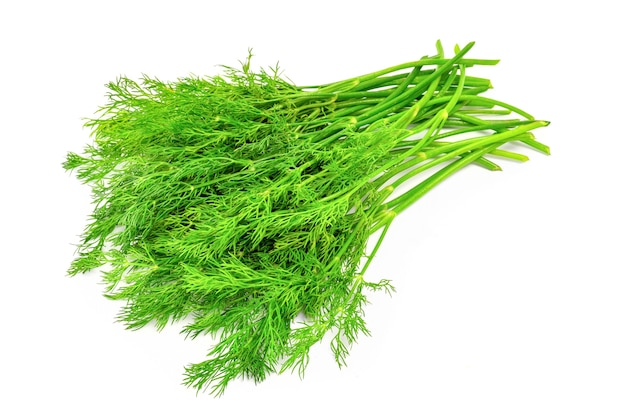 Bunch fresh dill herb isolated.