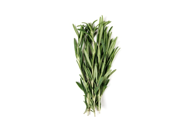 Bunch of fresh green rosemary isolated on white.