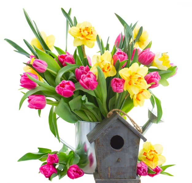 Bunch  of fresh pink tulip flowers and yellow daffodils with birdcage isolated on white background