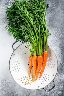Bunch of fresh washed carrots with green leaves in a colander