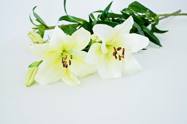Bunch of fresh white lily on the white background