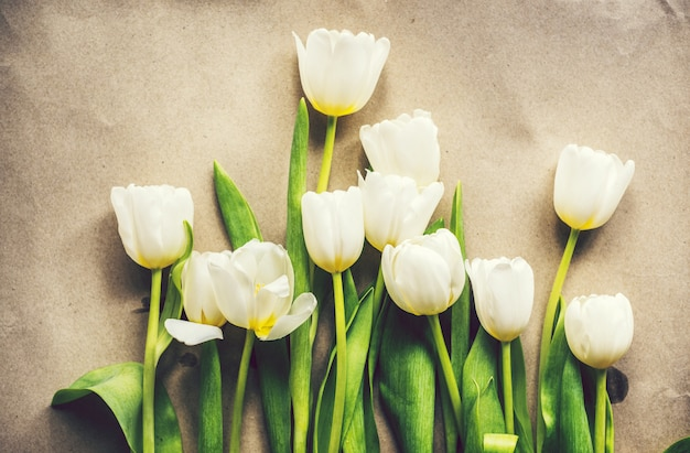 A bunch of fresh white tulips