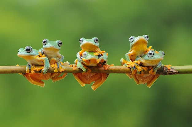 Bunch of frogs on a bamboo stick
