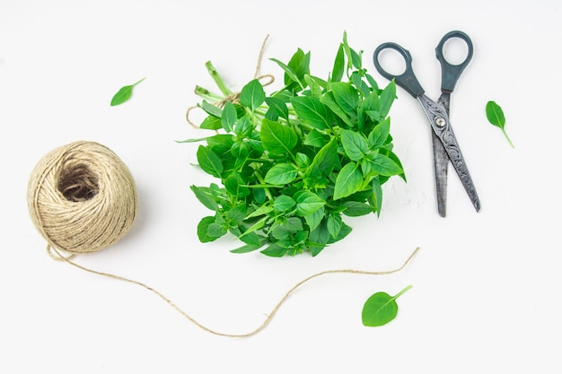 A bunch of green lemon basil with a tangle of twine and scissors on a white concrete table