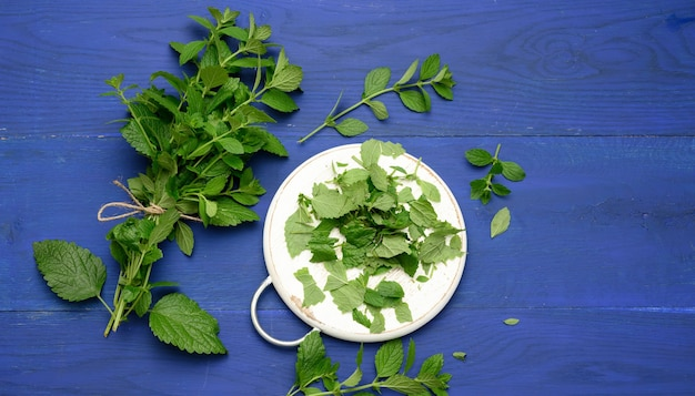 Bunch of green mint on a blue wooden  background, fragrant spice for cocktails and desserts, close up