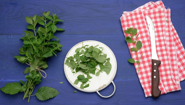 Bunch of green mint on a blue wooden  background, fragrant spice for cocktails and desserts, top view