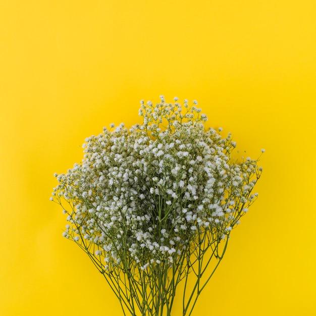 Bunch of gypsophila on yellow background