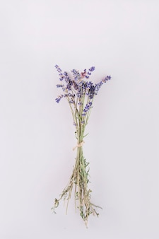 Bunch of lavenders