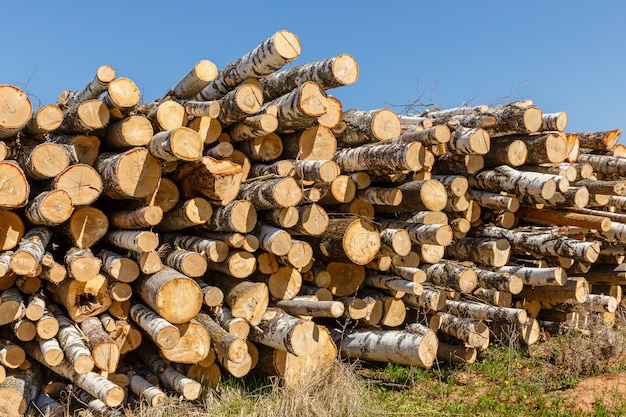 Bunch of logs stacked up.