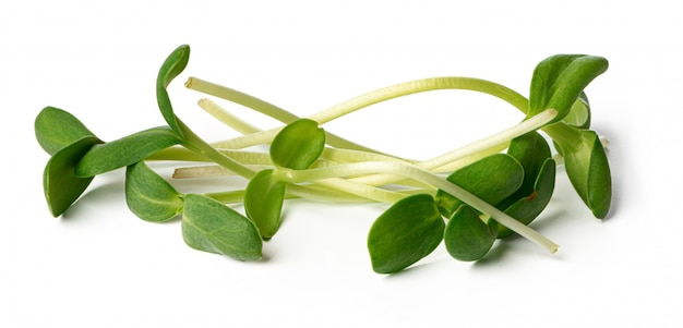 Bunch of micro green sprouts isolated on white background
