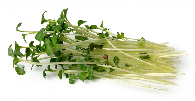 Bunch of micro green sprouts isolated on white