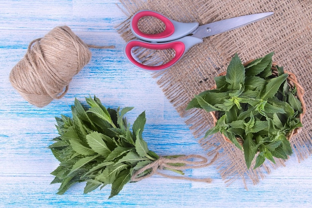 A bunch of mint with a rope and scissors on a blue wooden background, top view.