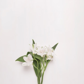 緑の葉が付いている茎に花の束