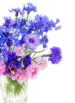 파란색과 분홍색 cornflowers 절연의 무리