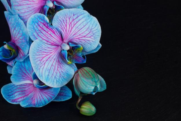 黒の背景に青い蘭の束
