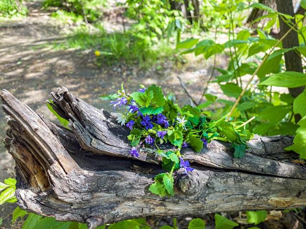 森の木の切り株に青い野花の束