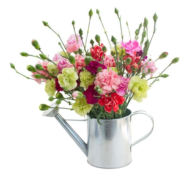 白いスペースに分離されたカーネーションの花の束