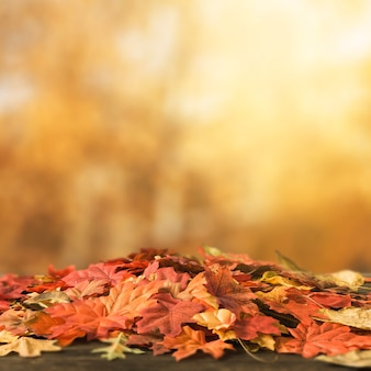 Bunch of colored leaves lying on ground