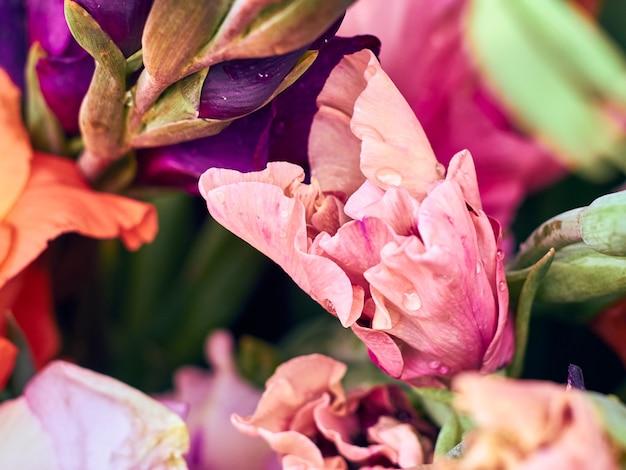 カラフルなグラジオラスの花の束
