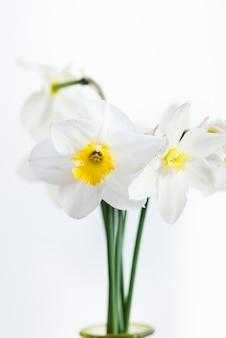 白い背景で隔離の花瓶の水仙の束。イースターの装飾が施された家のインテリア。新鮮な春の花の花束。 glss花瓶の白い水仙水仙。コピースペース