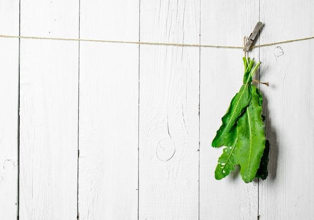 ひもに新鮮なハーブの束。白い木製の壁に。