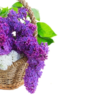 バスケットの新鮮なライラックの花の束は、白い背景で隔離のクローズアップ
