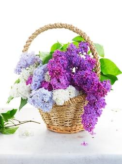 白い背景で隔離のテーブルの上のバスケットに新鮮なライラックの花の束