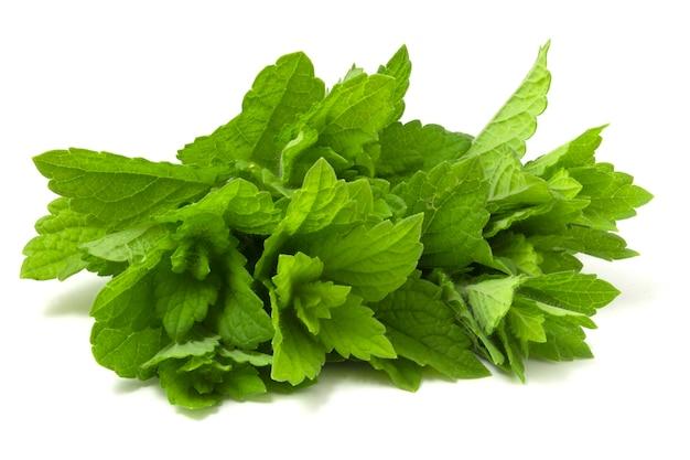 흰색 배경에 고립 된 신선한 민트의 무리입니다. 풍부한 향기가 나는 녹색 향기로운 식물.