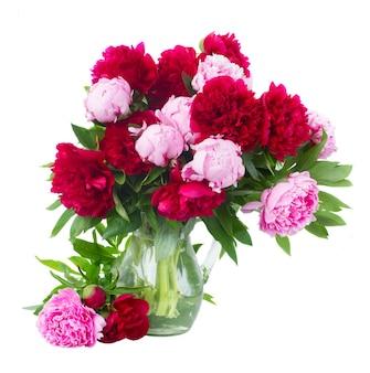 白で隔離のガラスの花瓶の新鮮なピンクと赤の牡丹の束