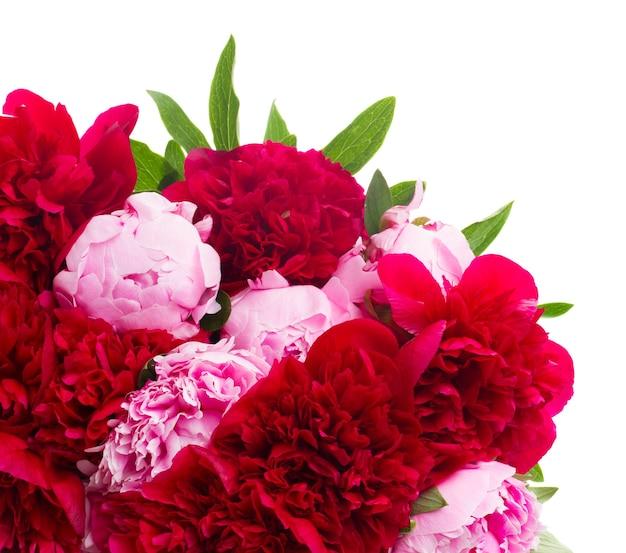 Букет из свежих розовых и красных пионов, изолированные на белом фоне
