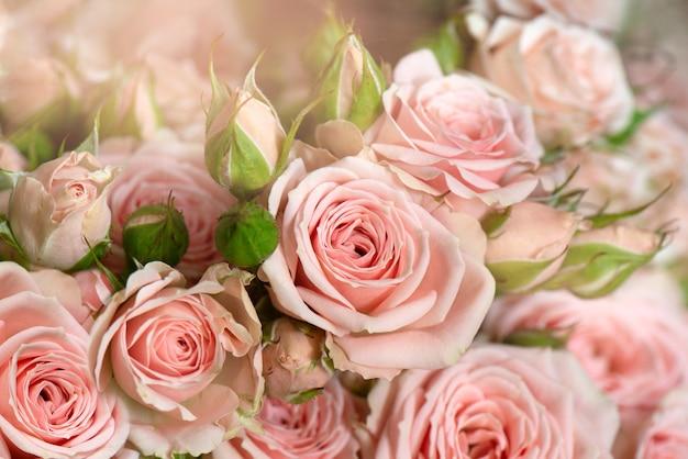 신선한 분홍색 창백한 장미 꽃 배경의 무리