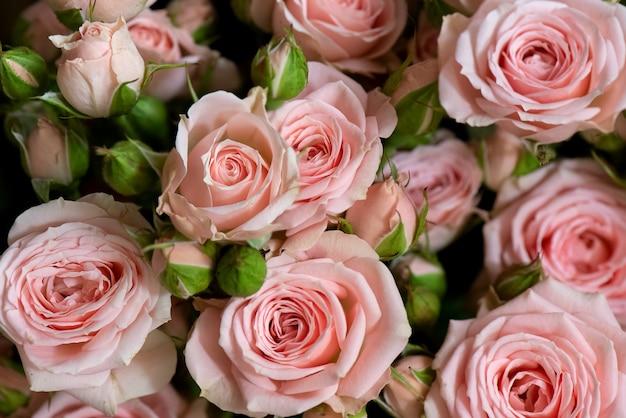 신선한 핑크 장미 꽃 배경의 무리